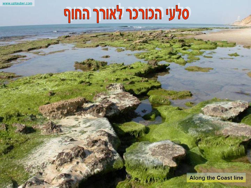 www.uzitauber.com Tel Aviv