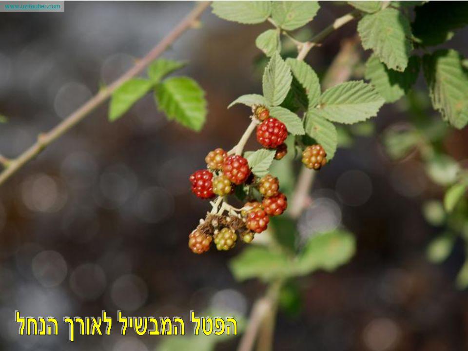 www.uzitauber.com