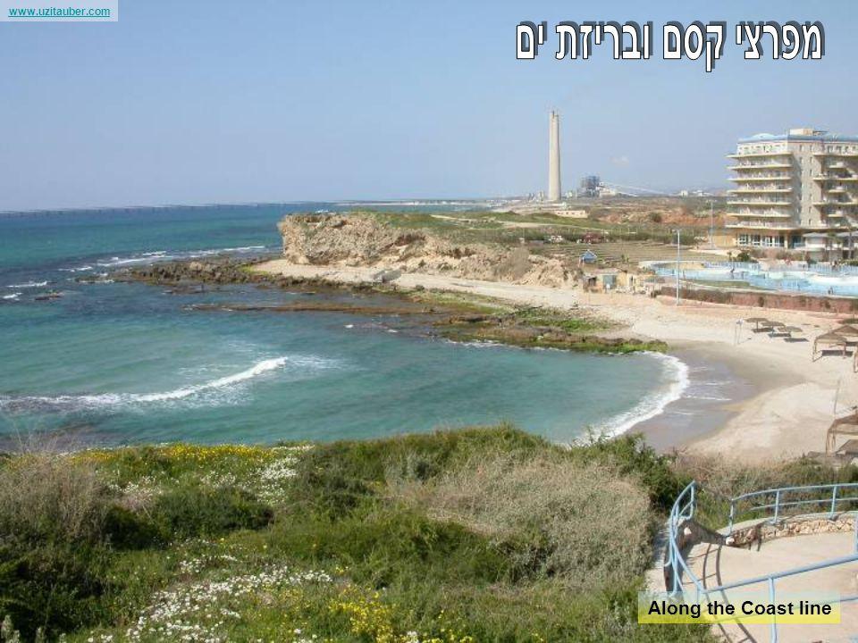 www.uzitauber.com The city of Zafet