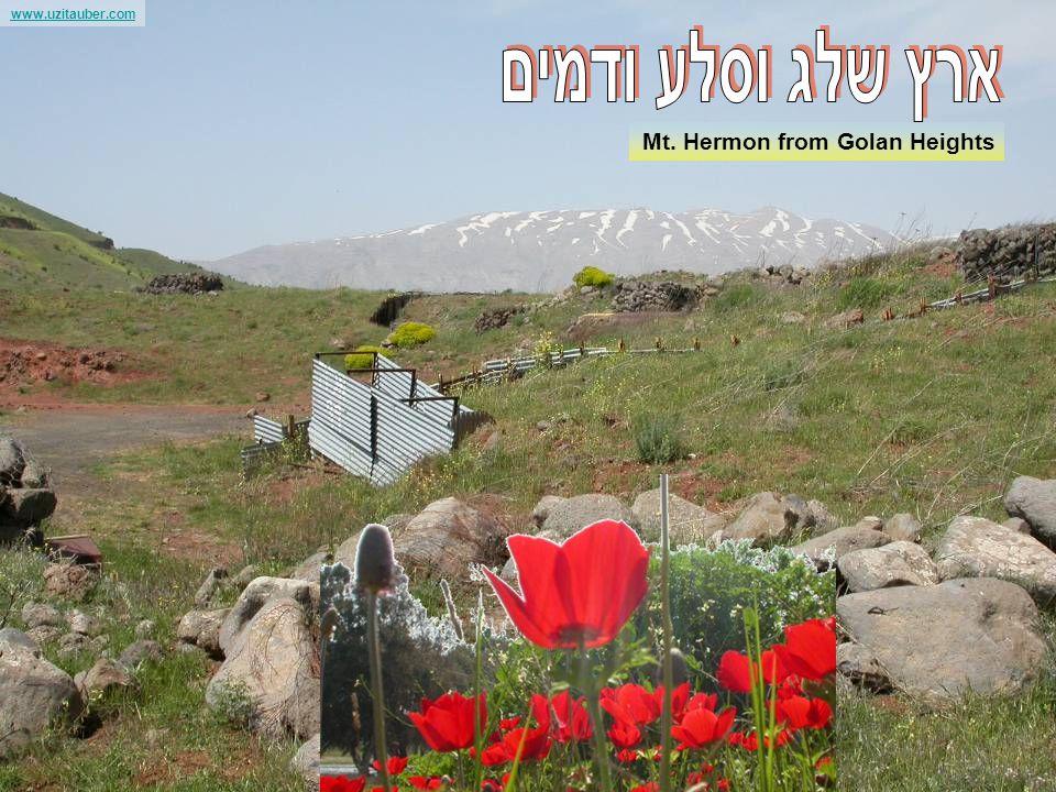 www.uzitauber.com In the Sea of Galilee