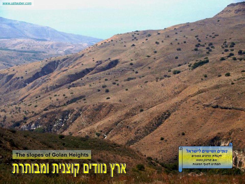 www.uzitauber.com Mt. Hermon from Golan Heights