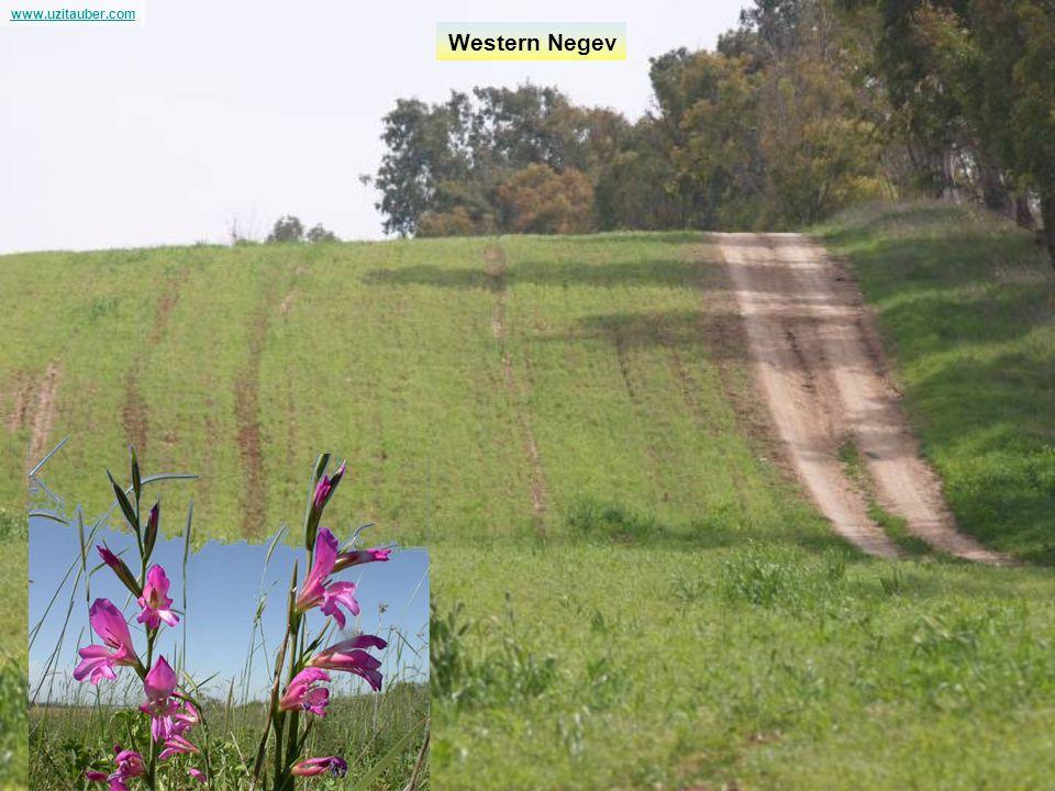www.uzitauber.com Western Negev