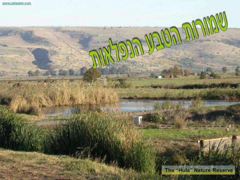 www.uzitauber.com The slopes of Golan Heights נופים ושישים לישראל לקבלת פרטים נוספים וגם סרטון נושא המתינו לסוף המצגת