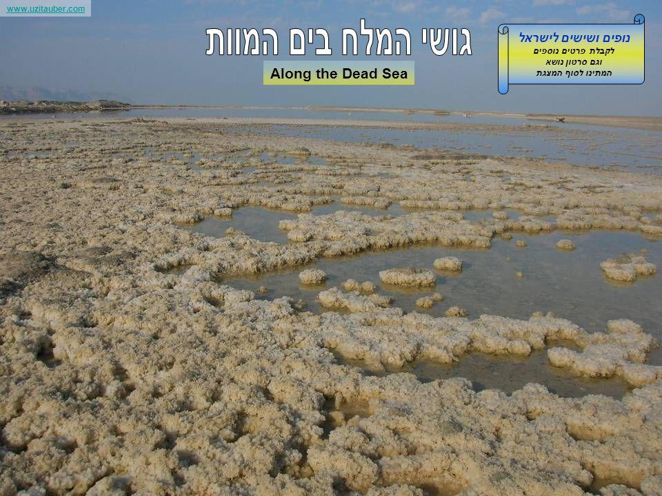www.uzitauber.com Along the Dead Sea