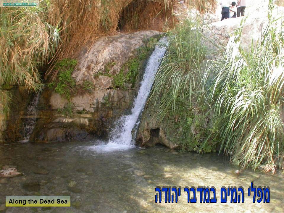 www.uzitauber.com Along the Dead Sea נופים ושישים לישראל לקבלת פרטים נוספים וגם סרטון נושא המתינו לסוף המצגת