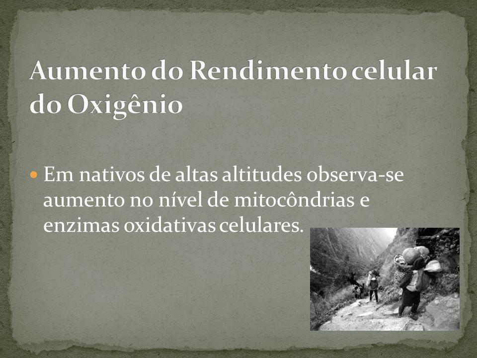 Em nativos de altas altitudes observa-se aumento no nível de mitocôndrias e enzimas oxidativas celulares.
