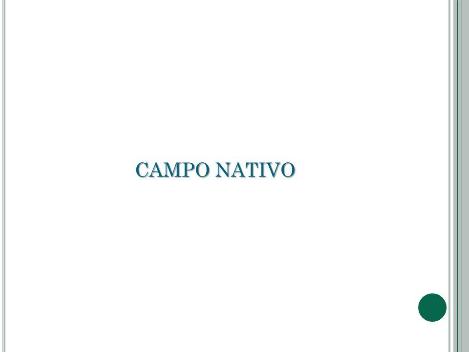 CAMPO NATIVO
