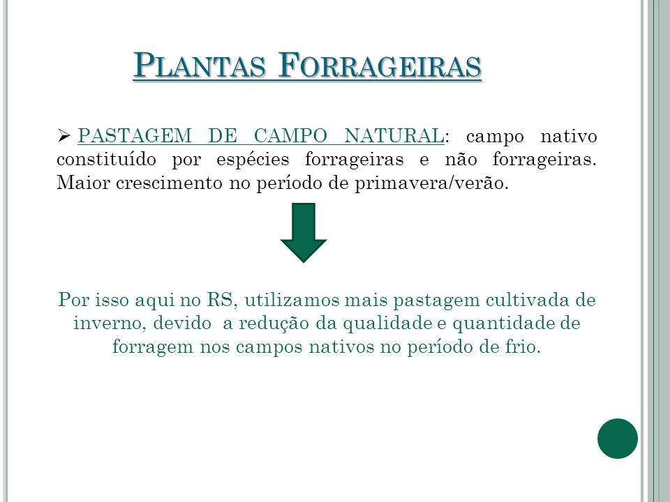 P LANTAS F ORRAGEIRAS  PASTAGEM DE CAMPO NATURAL: campo nativo constituído por espécies forrageiras e não forrageiras. Maior crescimento no período d