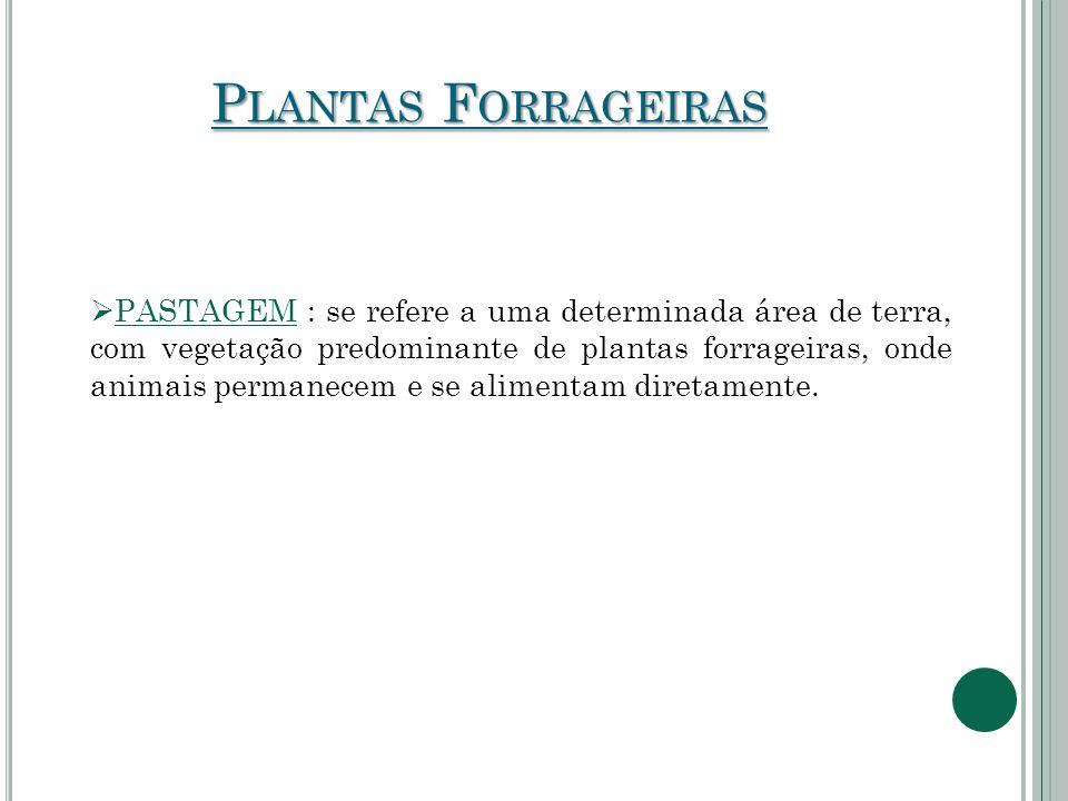 P LANTAS F ORRAGEIRAS  PASTAGEM : se refere a uma determinada área de terra, com vegetação predominante de plantas forrageiras, onde animais permanec