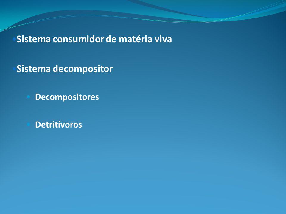 Sistema consumidor de matéria viva Sistema decompositor Decompositores Detritívoros