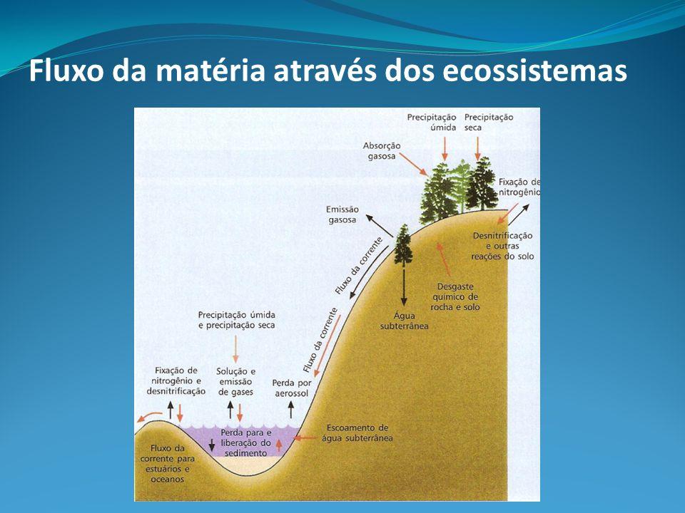 Fluxo da matéria através dos ecossistemas