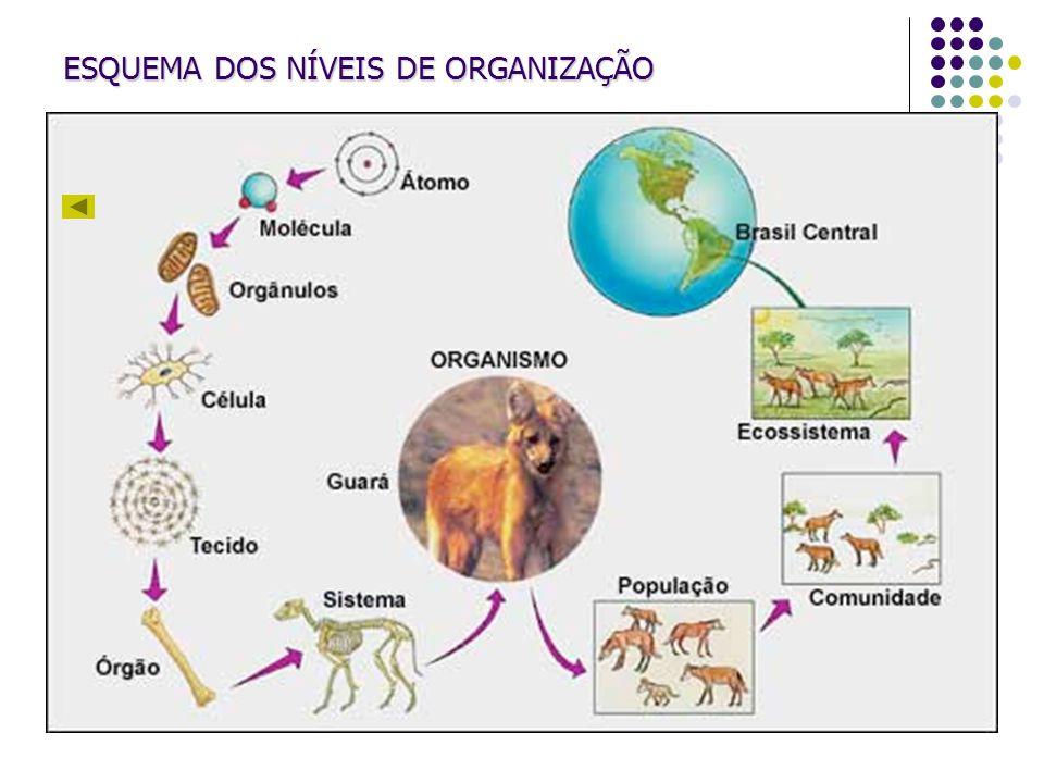 Nomenclatura ecológica Nicho ecológico:conjunto de atividades de uma espécie em sua interação com a comunidade e com o ambiente físico.
