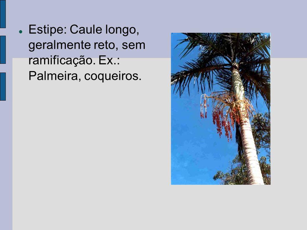 Estipe: Caule longo, geralmente reto, sem ramificação. Ex.: Palmeira, coqueiros.