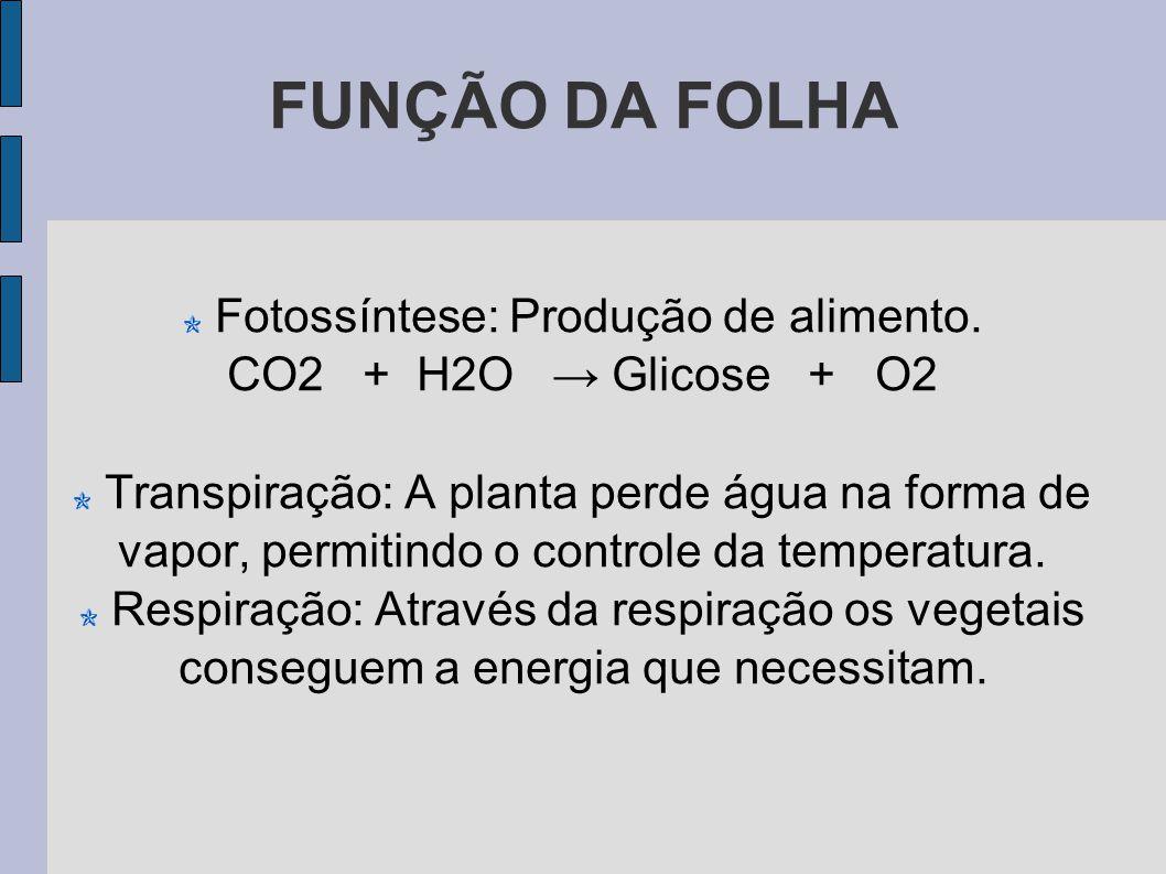 FUNÇÃO DA FOLHA Fotossíntese: Produção de alimento.