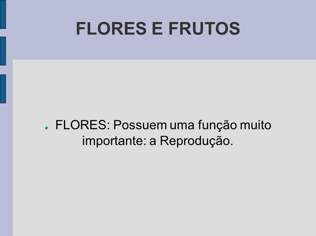 FLORES E FRUTOS FLORES: Possuem uma função muito importante: a Reprodução.
