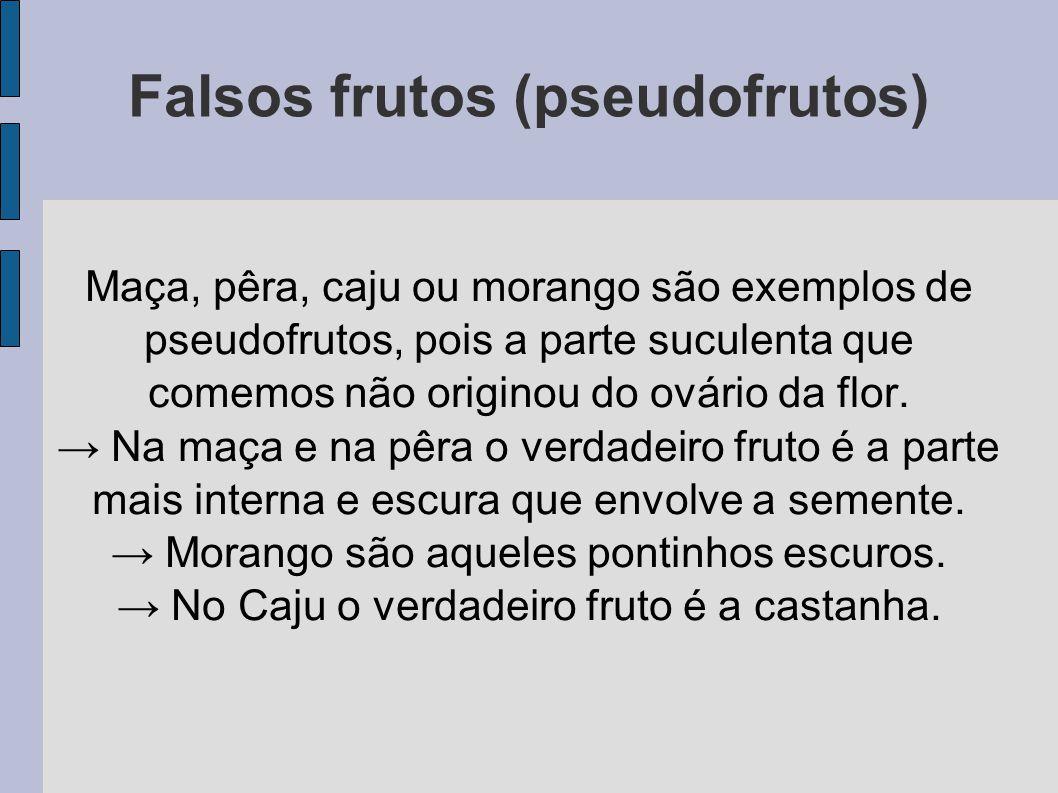 Falsos frutos (pseudofrutos) Maça, pêra, caju ou morango são exemplos de pseudofrutos, pois a parte suculenta que comemos não originou do ovário da flor.
