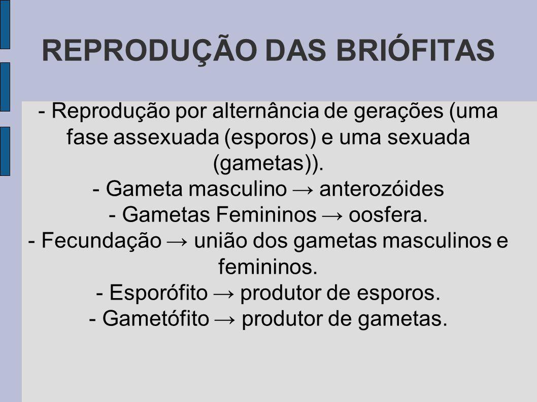 REPRODUÇÃO DAS BRIÓFITAS - Reprodução por alternância de gerações (uma fase assexuada (esporos) e uma sexuada (gametas)).