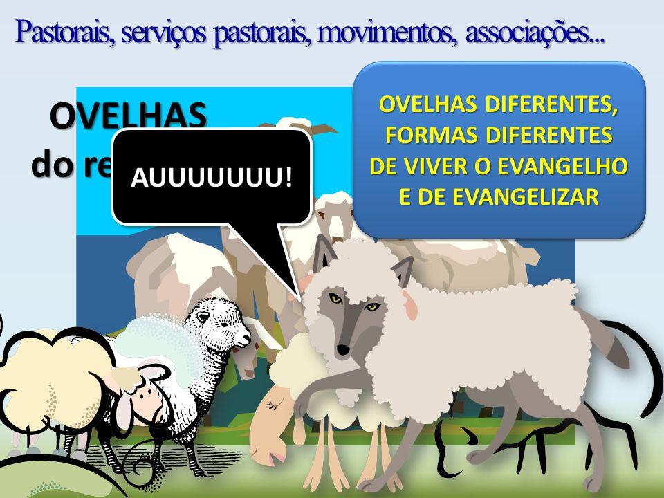 Pastorais, serviços pastorais, movimentos, associações... OVELHAS do rebanho AUUUUUUU! OVELHAS DIFERENTES, FORMAS DIFERENTES DE VIVER O EVANGELHO E DE