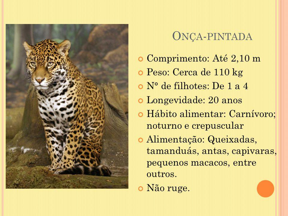 O NÇA - PINTADA Comprimento: Até 2,10 m Peso: Cerca de 110 kg N° de filhotes: De 1 a 4 Longevidade: 20 anos Hábito alimentar: Carnívoro; noturno e cre
