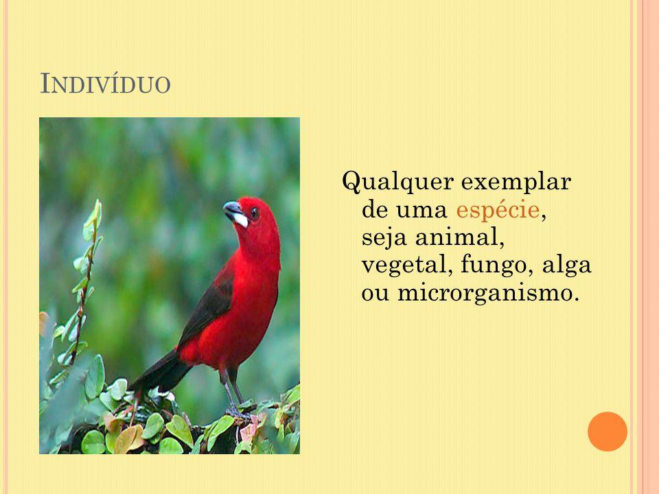 I NDIVÍDUO Qualquer exemplar de uma espécie, seja animal, vegetal, fungo, alga ou microrganismo.