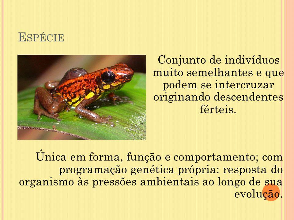 E SPÉCIE Conjunto de indivíduos muito semelhantes e que podem se intercruzar originando descendentes férteis. Única em forma, função e comportamento;
