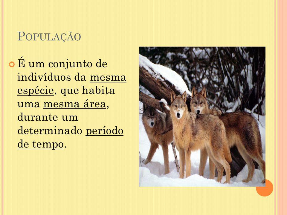 P OPULAÇÃO É um conjunto de indivíduos da mesma espécie, que habita uma mesma área, durante um determinado período de tempo.
