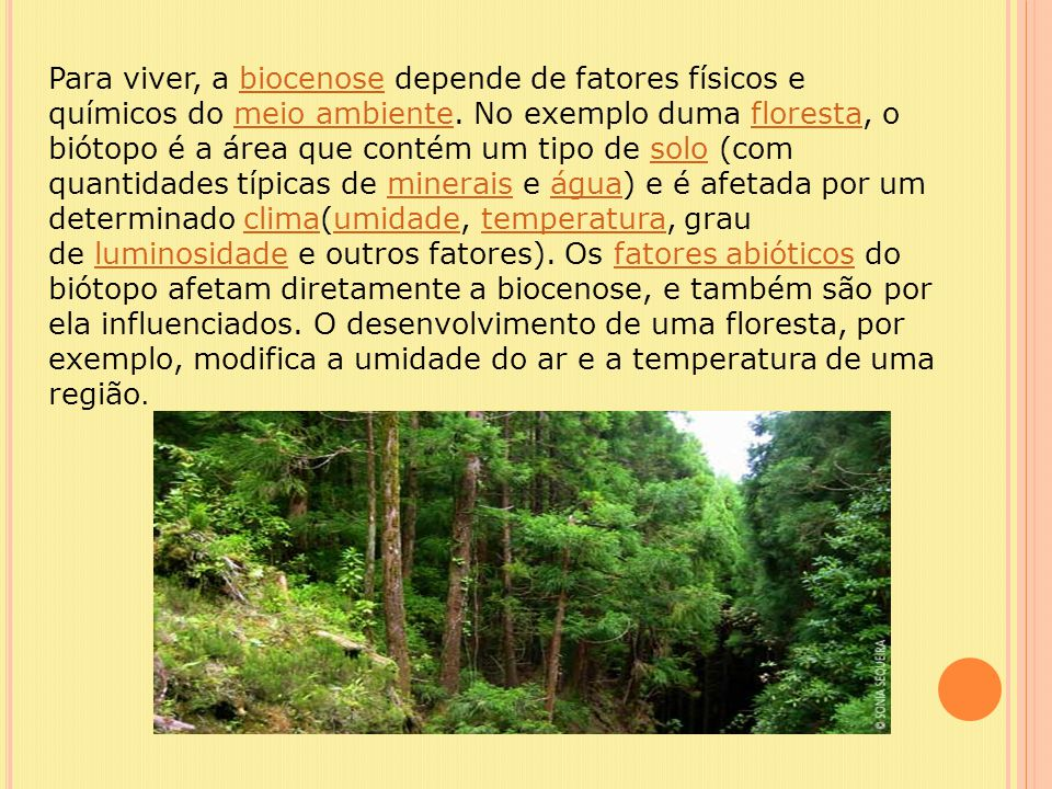 Para viver, a biocenose depende de fatores físicos e químicos do meio ambiente. No exemplo duma floresta, o biótopo é a área que contém um tipo de sol
