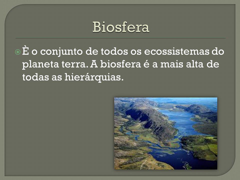  È o conjunto de todos os ecossistemas do planeta terra. A biosfera é a mais alta de todas as hierárquias.