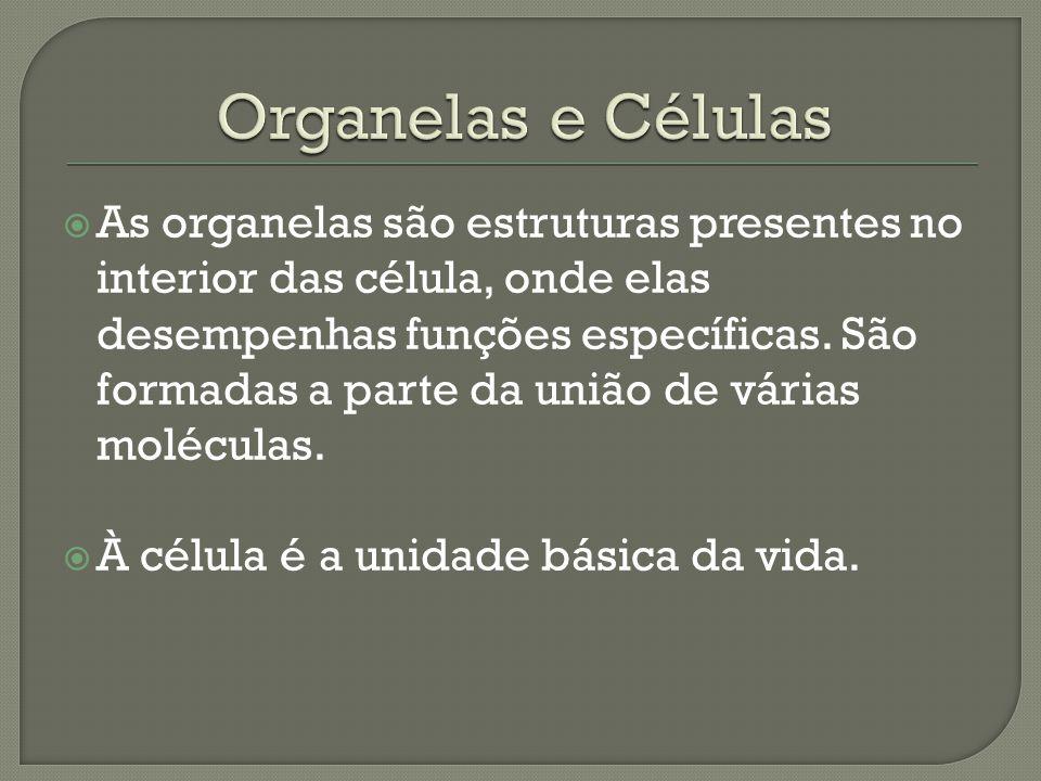  As organelas são estruturas presentes no interior das célula, onde elas desempenhas funções específicas. São formadas a parte da união de várias mol