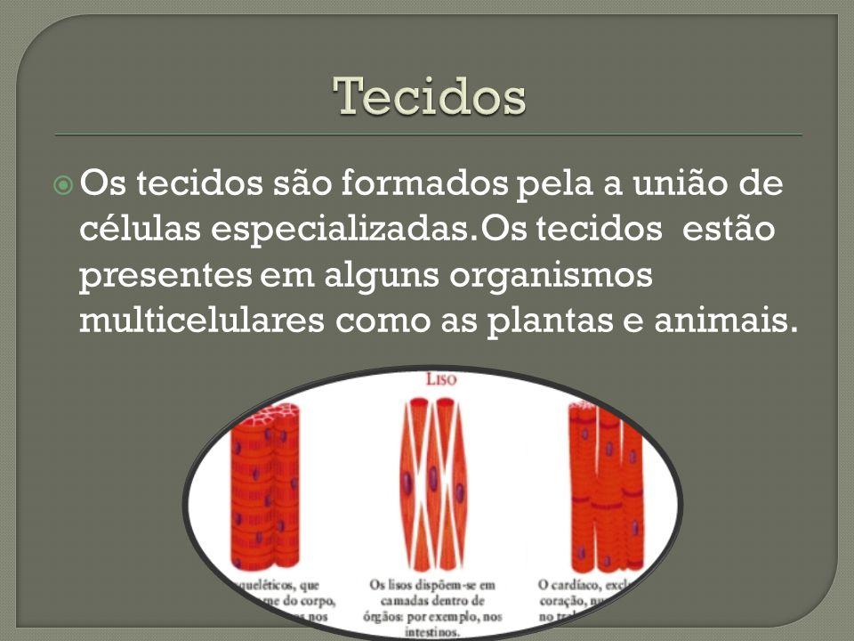  Os tecidos são formados pela a união de células especializadas.Os tecidos estão presentes em alguns organismos multicelulares como as plantas e anim