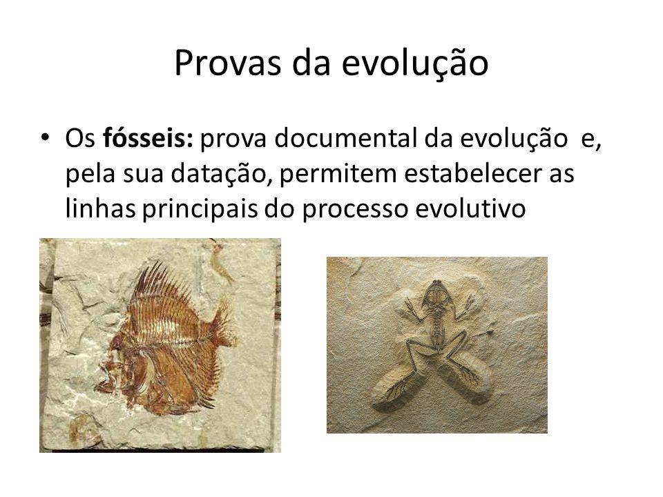Provas da evolução Os fósseis: prova documental da evolução e, pela sua datação, permitem estabelecer as linhas principais do processo evolutivo