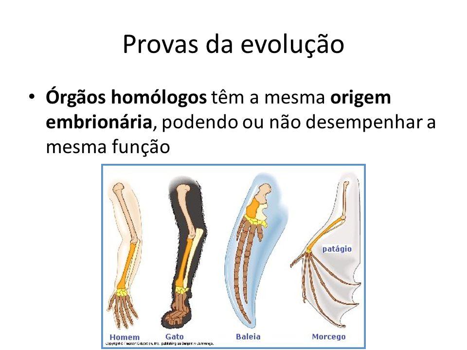 Provas da evolução Órgãos homólogos têm a mesma origem embrionária, podendo ou não desempenhar a mesma função