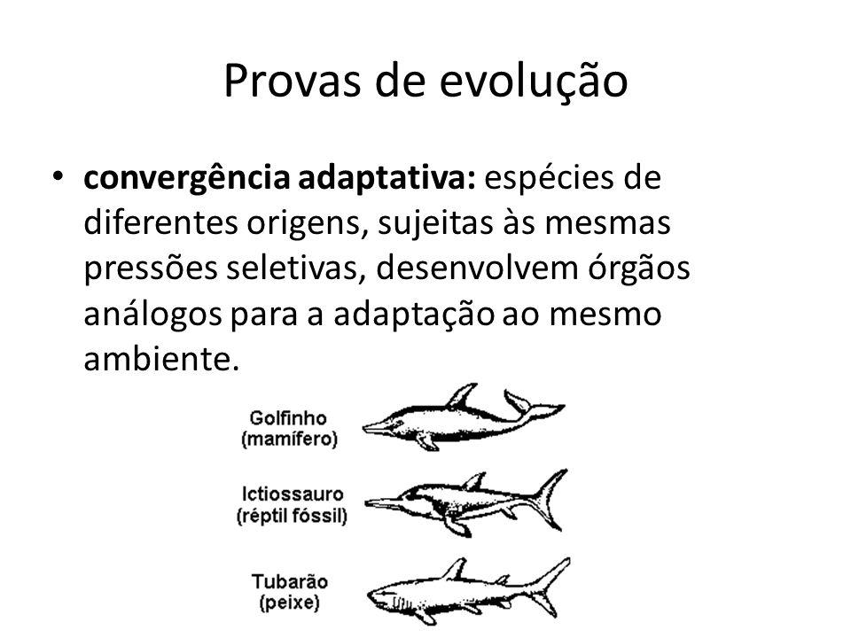 Provas de evolução convergência adaptativa: espécies de diferentes origens, sujeitas às mesmas pressões seletivas, desenvolvem órgãos análogos para a