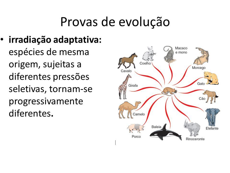 Provas de evolução irradiação adaptativa: espécies de mesma origem, sujeitas a diferentes pressões seletivas, tornam-se progressivamente diferentes.