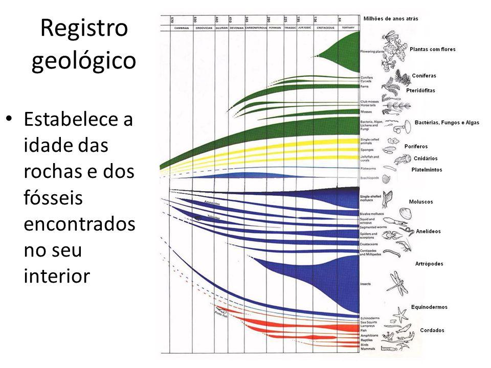 Registro geológico Estabelece a idade das rochas e dos fósseis encontrados no seu interior