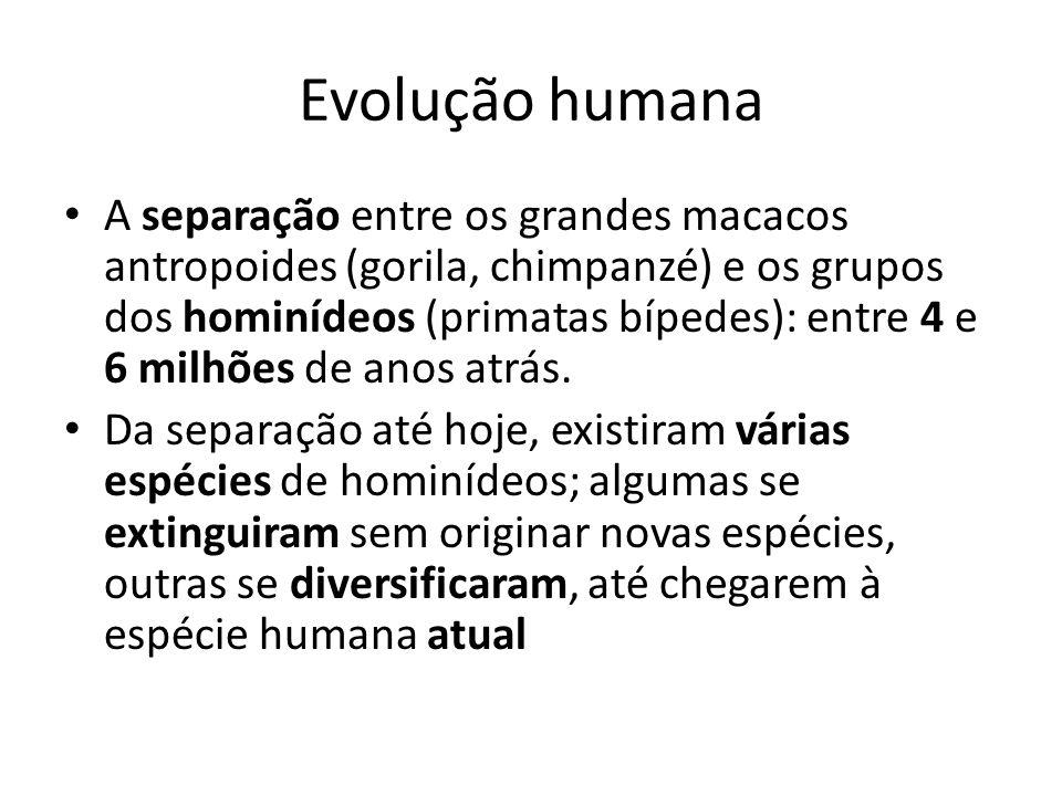 Evolução humana A separação entre os grandes macacos antropoides (gorila, chimpanzé) e os grupos dos hominídeos (primatas bípedes): entre 4 e 6 milhõe