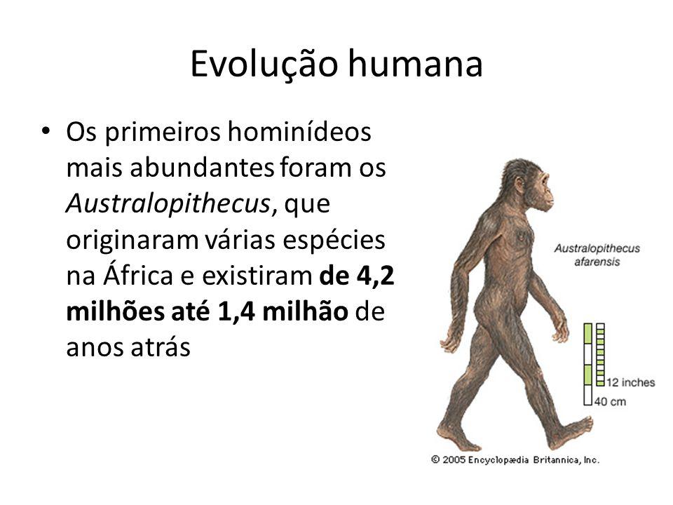 Evolução humana Os primeiros hominídeos mais abundantes foram os Australopithecus, que originaram várias espécies na África e existiram de 4,2 milhões