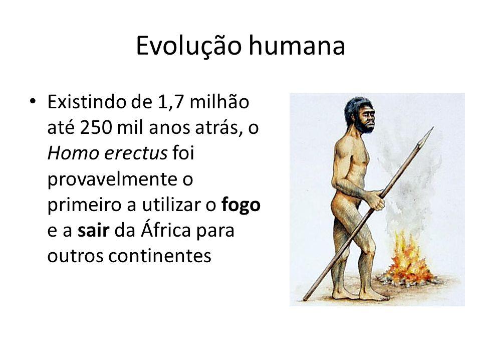 Evolução humana Existindo de 1,7 milhão até 250 mil anos atrás, o Homo erectus foi provavelmente o primeiro a utilizar o fogo e a sair da África para