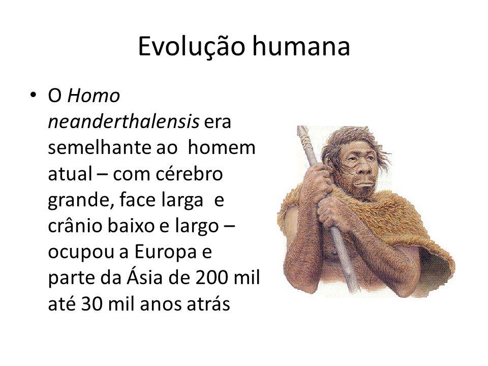 Evolução humana O Homo neanderthalensis era semelhante ao homem atual – com cérebro grande, face larga e crânio baixo e largo – ocupou a Europa e part