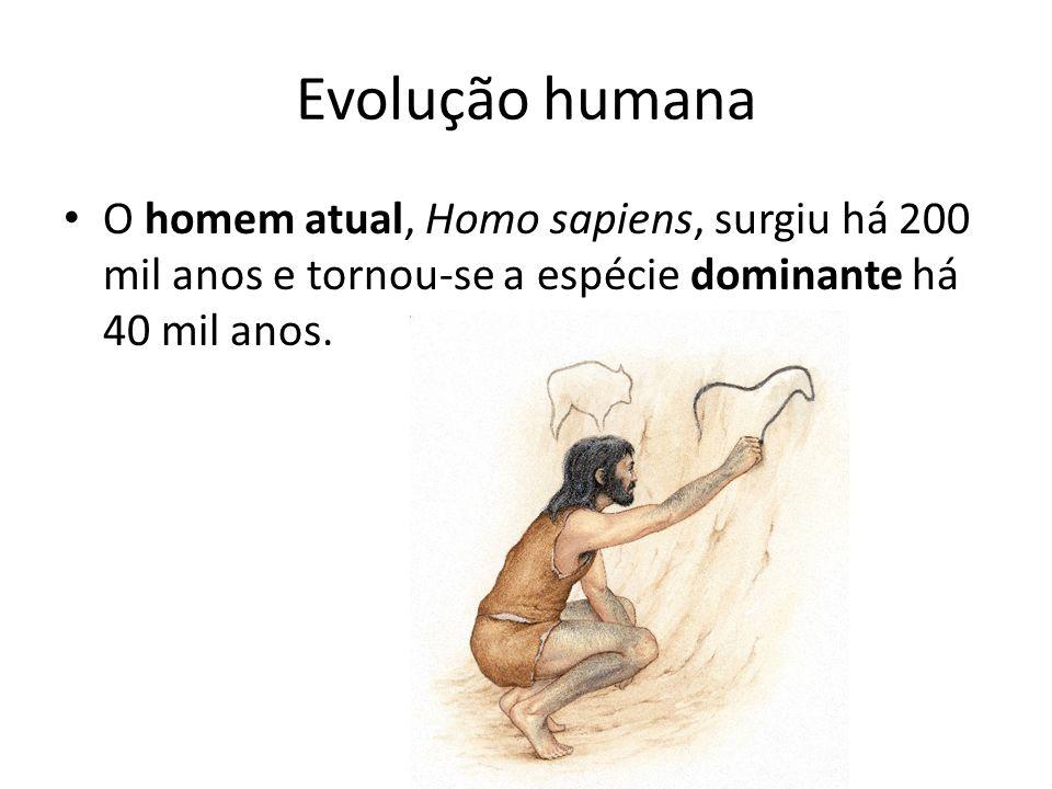 Evolução humana O homem atual, Homo sapiens, surgiu há 200 mil anos e tornou-se a espécie dominante há 40 mil anos.