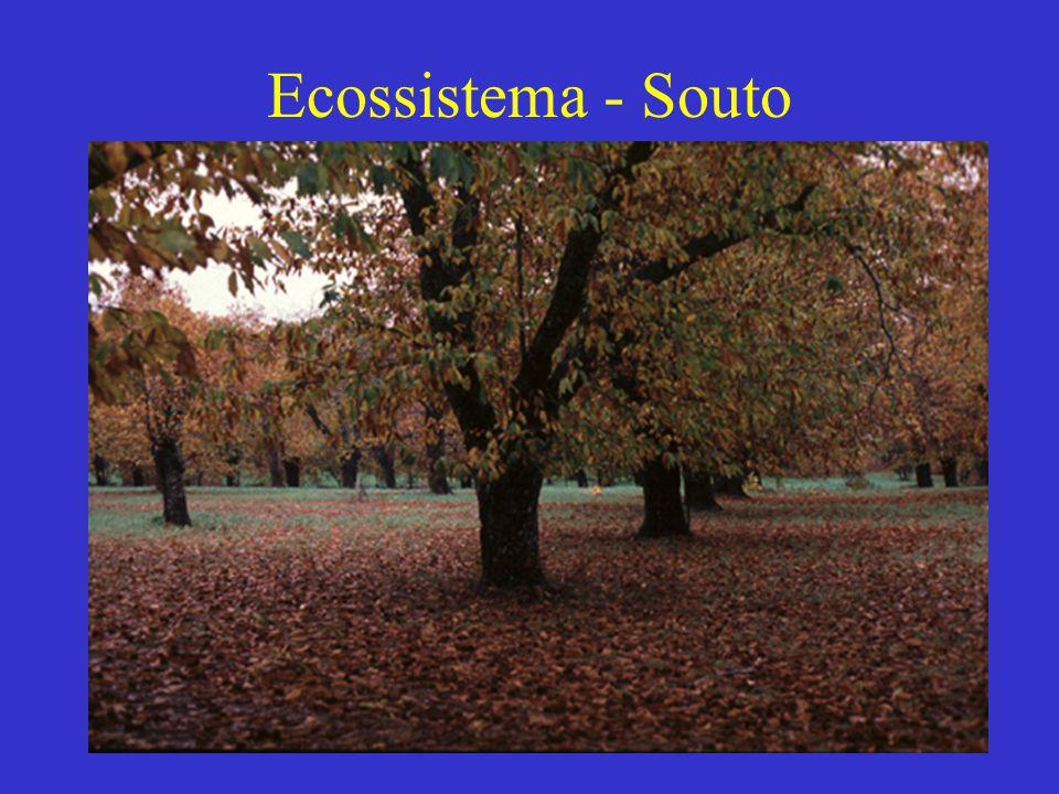 Ecossistema - Souto