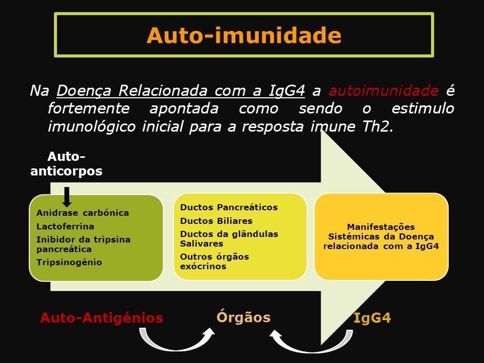 Auto-imunidade Na Doença Relacionada com a IgG4 a autoimunidade é fortemente apontada como sendo o estimulo imunológico inicial para a resposta imune