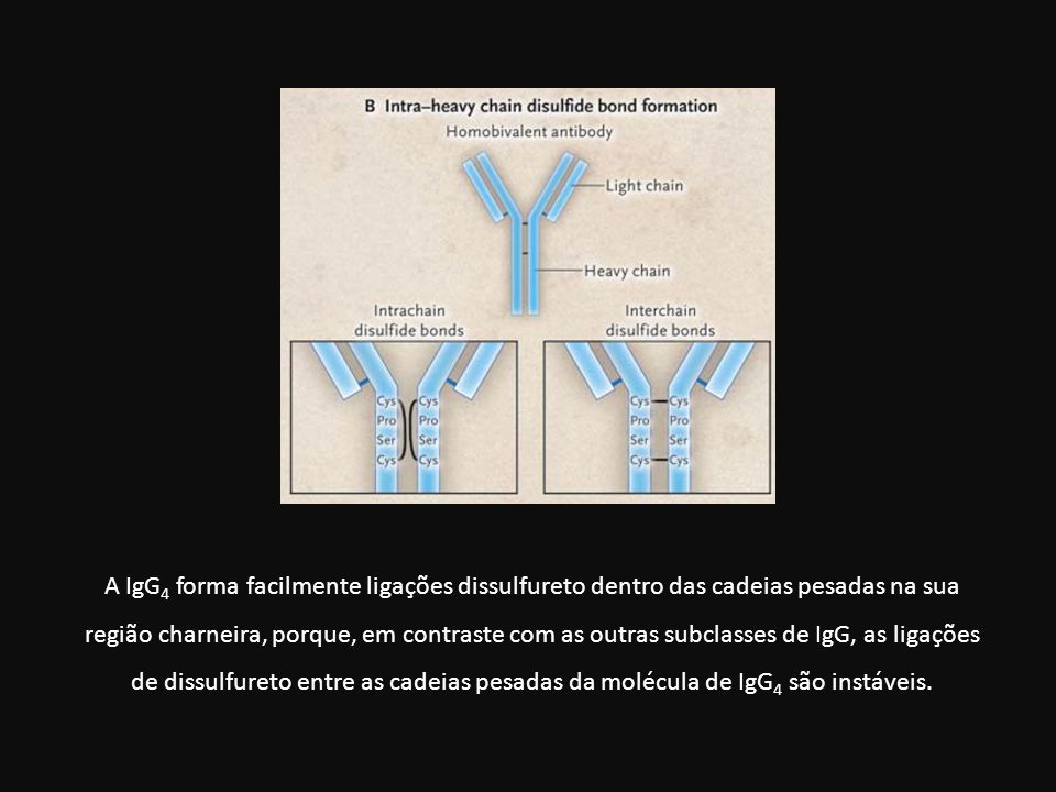 A IgG 4 forma facilmente ligações dissulfureto dentro das cadeias pesadas na sua região charneira, porque, em contraste com as outras subclasses de Ig