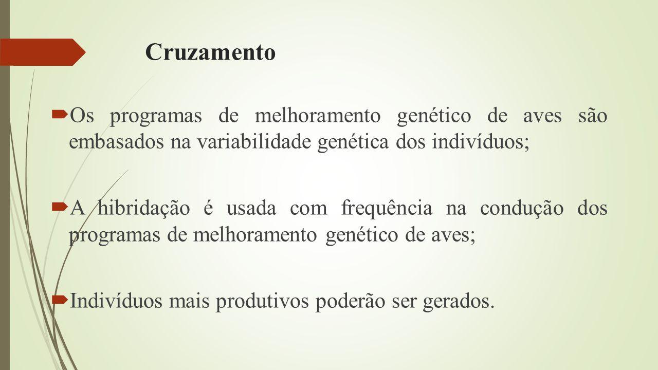 Cruzamento  Os programas de melhoramento genético de aves são embasados na variabilidade genética dos indivíduos;  A hibridação é usada com frequência na condução dos programas de melhoramento genético de aves;  Indivíduos mais produtivos poderão ser gerados.
