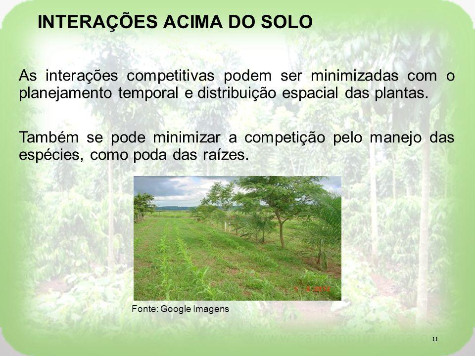 As interações competitivas podem ser minimizadas com o planejamento temporal e distribuição espacial das plantas.
