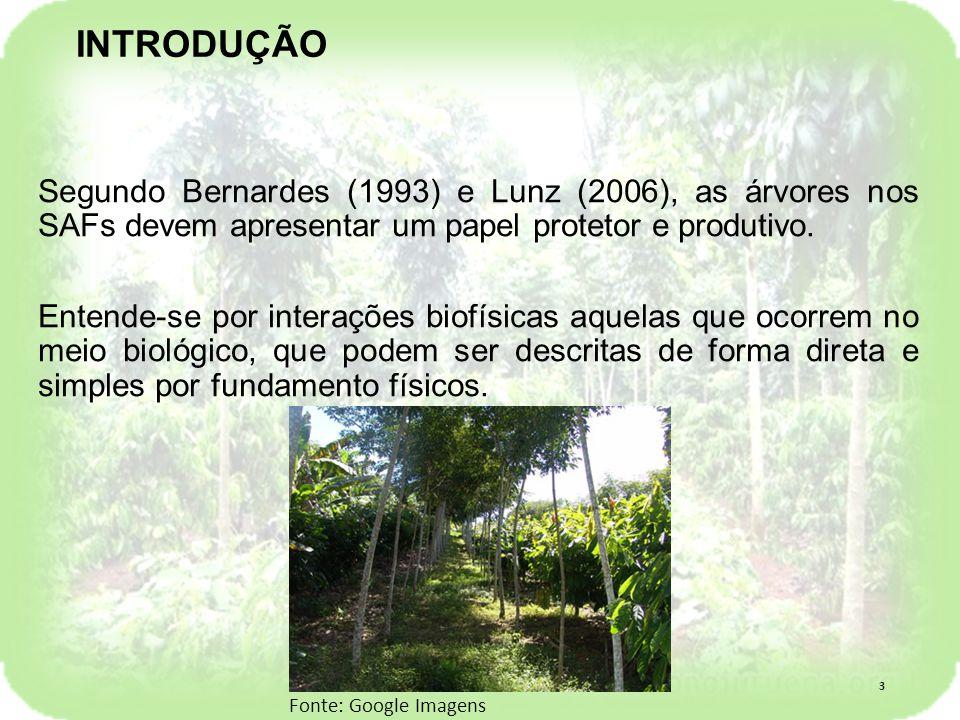 Segundo Bernardes (1993) e Lunz (2006), as árvores nos SAFs devem apresentar um papel protetor e produtivo.