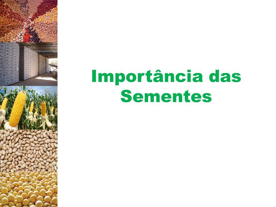 Importância das Sementes Produção agrícola Produtividade (kg/ha) para seis culturas de expressão econômica, no ano de 2004.
