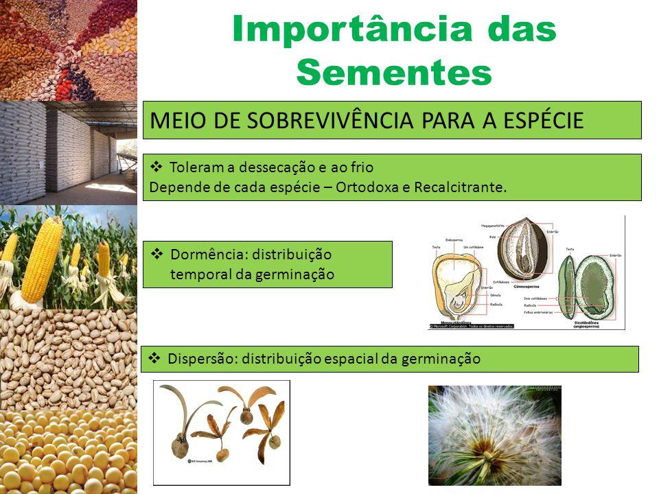 Importância das Sementes MULTIPLICAÇÃO DE PLANTAS  ± 350 mil espécies descritas  ± 250 mil multiplicadas por sementes