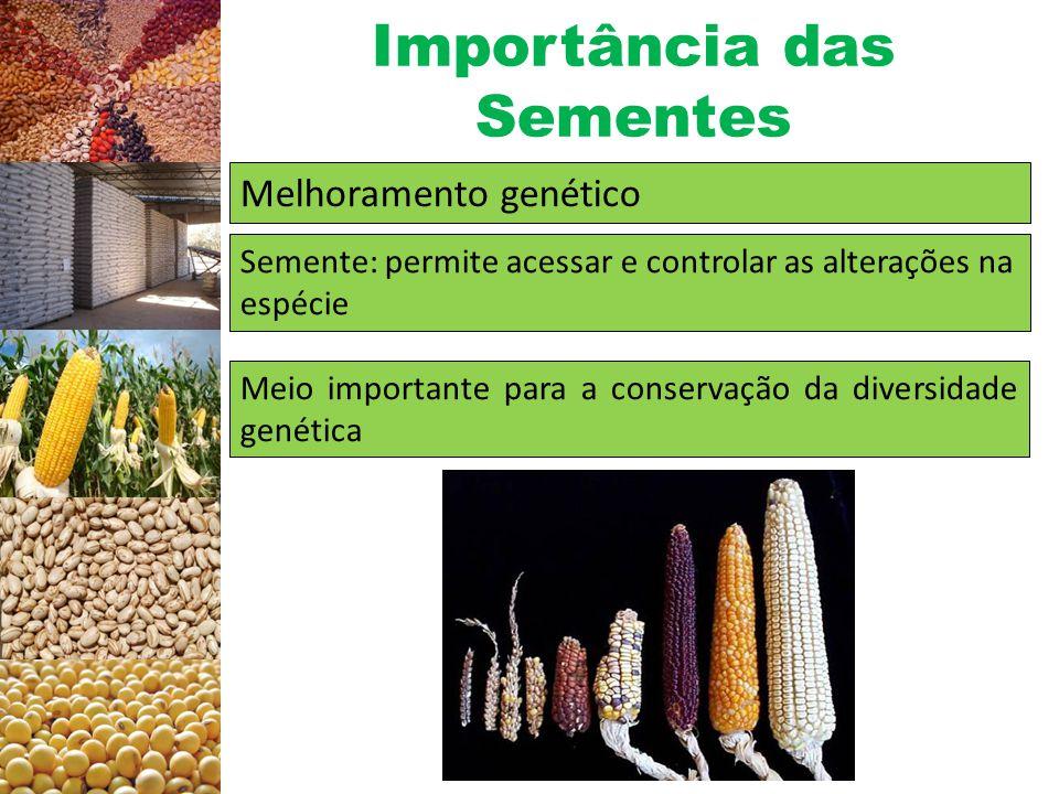Importância das Sementes Melhoramento genético Mecanismo de rápida difusão de novos cultivares