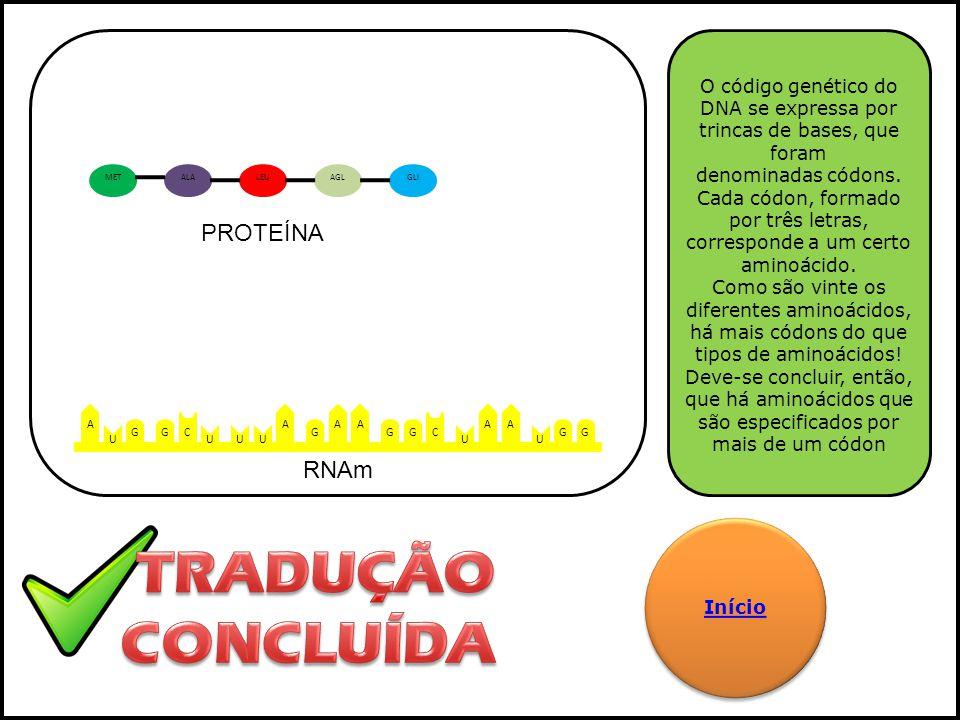 A G U C G UUU A G AA GG C U A U GG A O código genético do DNA se expressa por trincas de bases, que foram denominadas códons. Cada códon, formado por